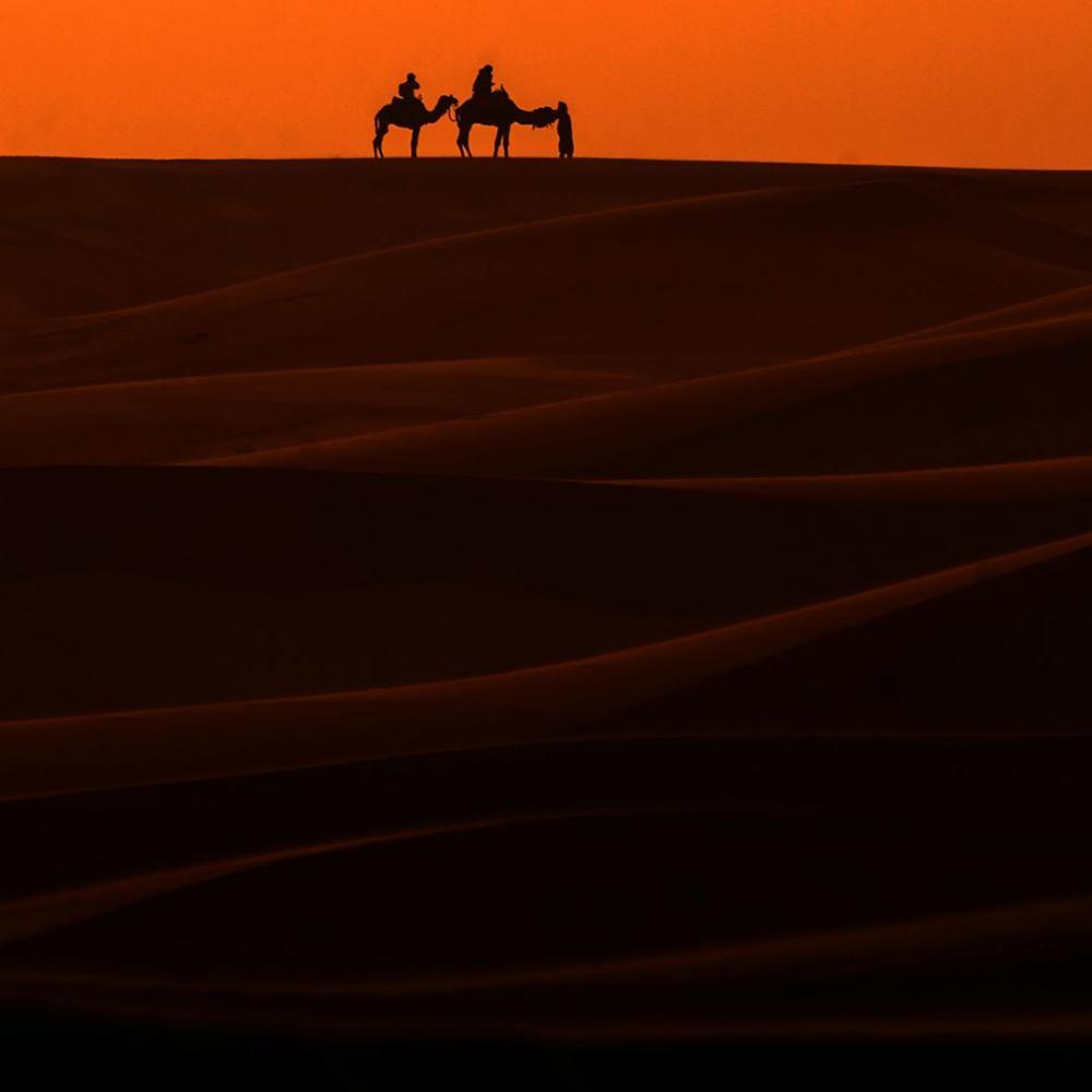 Maroc : Gallops of Morocco